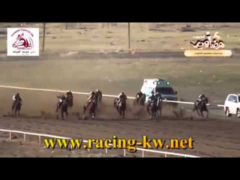 Horselover banna Kuwait my Lvly horse Hadur