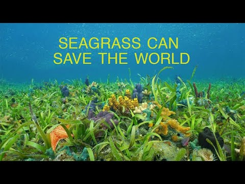 Marine Plants Can Save the World   Part 1: Seagrass