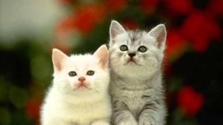 Фильм про кошек
