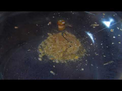 Carp Fishing HD 2 - South Africa Travel Channel 24