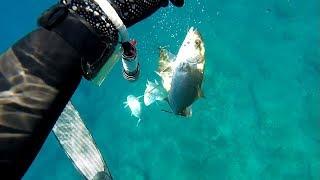 2x2 akya sarıkuyruk, 2x2 amberjack, zıpkınla balık avı, balık avı, ömer bırak