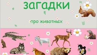 Детские загадки про животных. 12 загадок с отгадками и звуками животных.