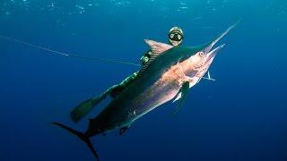 Spearfishing Madagascar & Mozambique with MJK