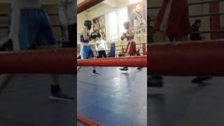 Соревнования по боксу в Махачкале