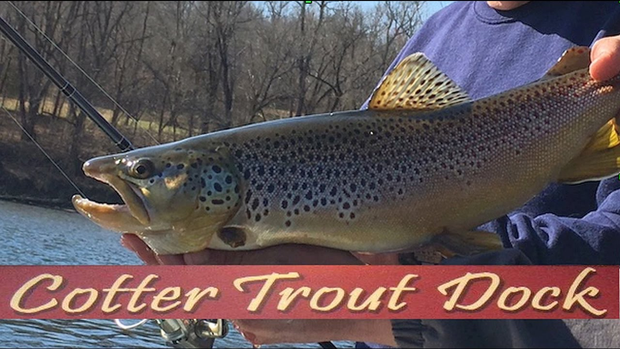 Arkansas white river trout fishing report february 22 for White river arkansas fishing report