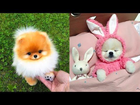 Baby Dogs  Cute and Funny Dog Videos Compilation #23 | Aww Animals