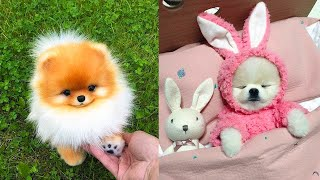 Baby Dogs - Cute and Funny Dog Videos Compilation #23 | Aww Animals