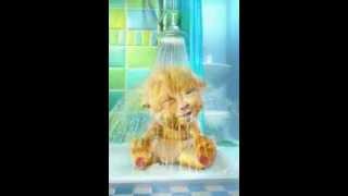 WhatsApp Videos::good morning::cute kitty
