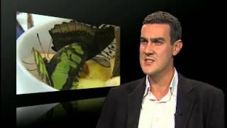 Butterflies die in Hirst exhibition