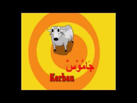 Nama Binatang Belajar Bahasa Arab
