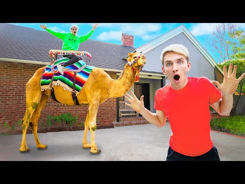 GIANT ZOO ANIMALS FOUND In SHARER FAM HOUSE!! (WHO DELIVERED A CAMEL?!)