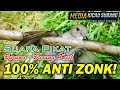 Suara Pikat Burung Kecil Anti Zonk Ampuh   Mp3 - Mp4 Download
