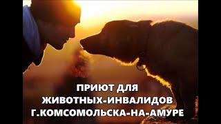 Общественная Организация Защиты Животных приют для животных-инвалидов ЗООСПАС  Комсомольска-на-Амуре