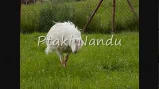 Farma Strusi w Garczynie/ Ostrich Farm in Garczyn