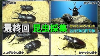 2016年のカブクワの昆虫採集はこれで終わりです!また来年! 【昆虫採集...