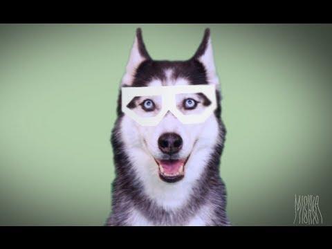 MISHKA: DUBSTEP DOG - YouTube