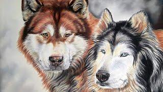 Draw My Pets: Alaskan Malamutes