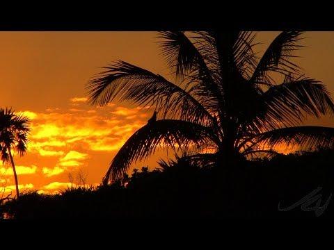 Sandos Playacar - Riviera Maya,Mexico -  highly recommended -  YouTube