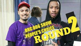 Brc Dog Show people choice award. American bully pups puppy's bulldog french bulldog exotic micros