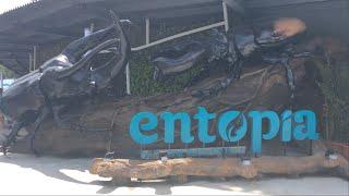 馬來西亞-檳城《Entopia》蟲鳴大地~(ˊ● ω ●ˋ)/