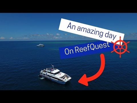 An amazing day on ReefQuest!
