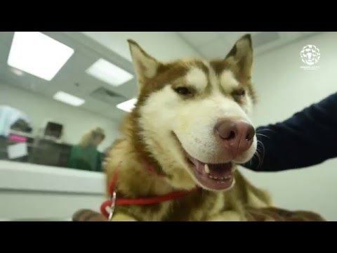 Rescued from a Korean dog meat farm:  Cedric & Mendy
