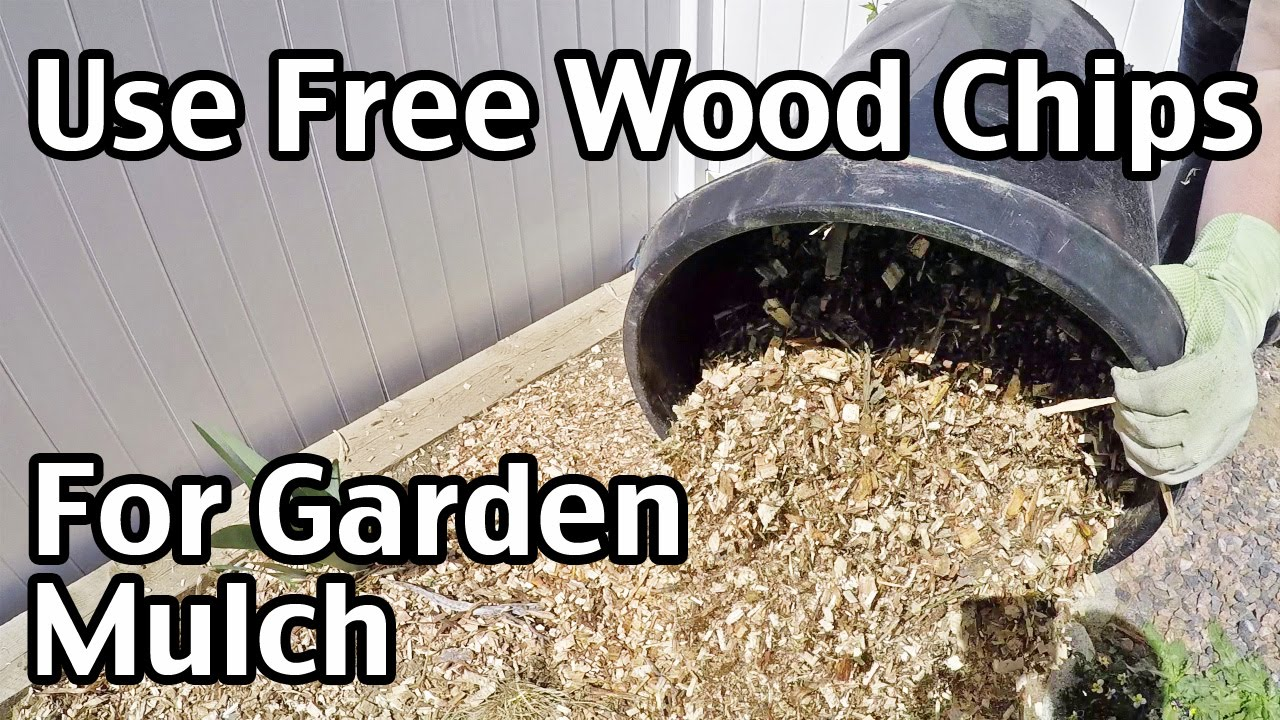 Wood Chip Uses ~ How to use free wood chips for garden mulch doovi