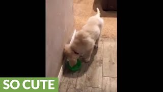 Clumsy little puppy makes a big mess