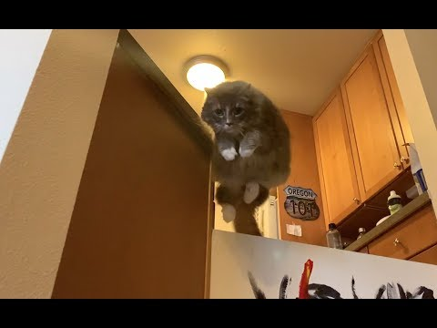 An amazing cat's majestic jumping in slow motion