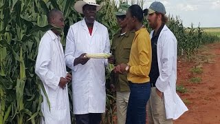 6 counties to share 62,000 bags of maize from Galana Kulalu project