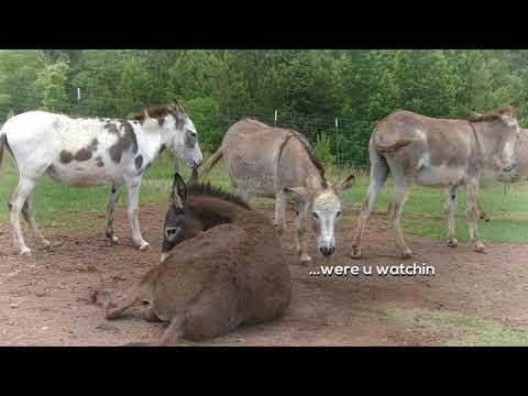 Donkey Bath Time!