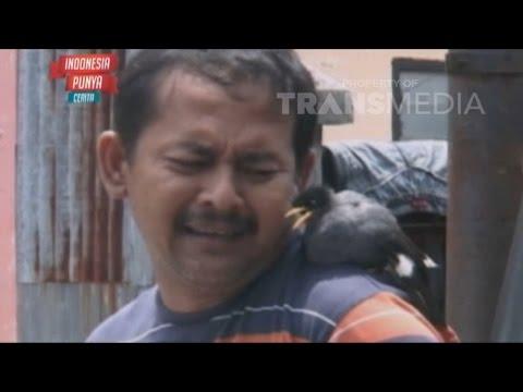 INDONESIA PUNYA CERITA 18 NOV 2015 - Kesetiaan Burung jalak