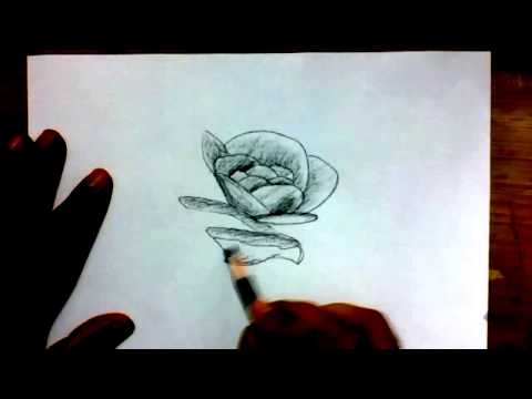 how-to-draw-a-rose-flower-with-charcoal-pencil-|-yzarts-|-yzarts