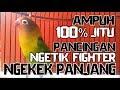 Terapi Sekali Pancing Saja  Jitu Memancing Lovebird Fighter Ngetik Dan Ngekek Panjang  Mp3 - Mp4 Download