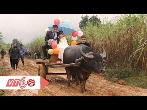 Tròn mắt, đám cưới rước dâu bằng xe trâu | VTC