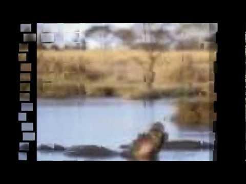 captain Dira wa Botswana ka Traditionale.wmv