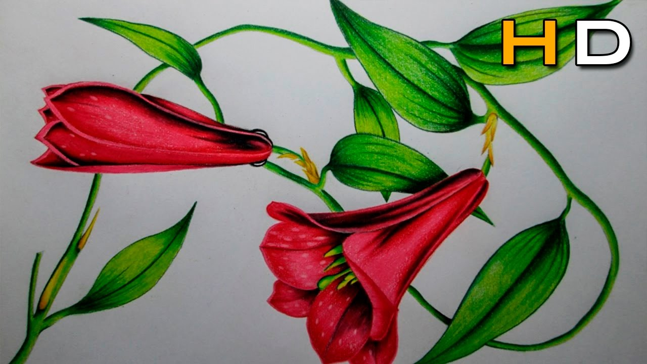 How to Draw a Flowers Step by Step With Colored Pencil - Timelapse ...