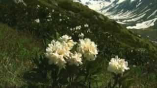 Tears of joy -Lacrimi de bucurie- Govi