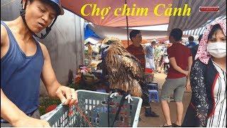 Phiên chợ bán các loại chim cảnh rẻ và đẹp nhất