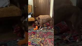 Pixie Stixx playing with foster sis