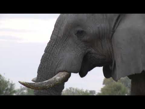 2^parte Botswana