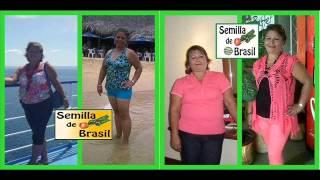 SEMILLA DE BRASIL CUMBRES MONTERREY