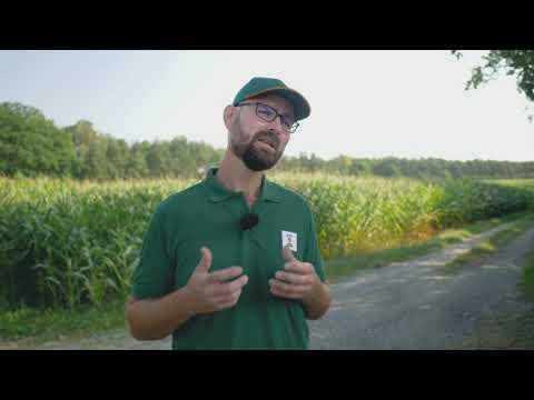 Mais und Stangenbohnen vereint: Wie Landwirte und Insekten profitieren   KWS World of Farming