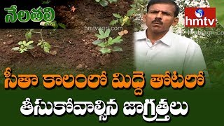 Terrace Gardening | Winter Season Crops Suggested by Ragothama Reddy | Nela Talli | hmtv