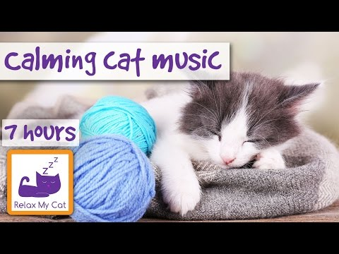 Extra Long Cat Music Playlist! Over 7 Hours of Relaxing Sleep Music for Cats and Kittens