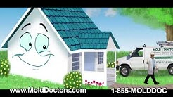 Mold Remediation & Mold Inspection Cape Cod and South Shore MA