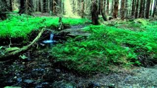 Relax & Spa. Звуки природы. Живой лес. Музыка для сна. Музыка для глубокого сна. Sleep. Deep sleep.(, 2015-11-30T12:21:25.000Z)