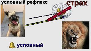 Анатомия: нервная система 3: условные и безусловные рефлексы, инстинкт, импринт