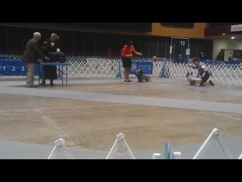 1.6.18 LOLKC Skye Terrier Best of Breed AKC