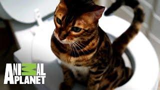 duea-entrena-a-gato-para-usar-el-inodoro-mi-gato-endemoniado-animal-planet
